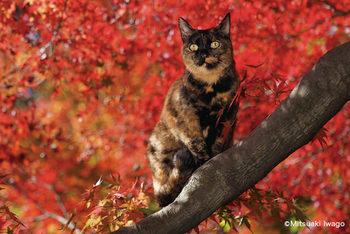 秋の京都とねこ.jpg